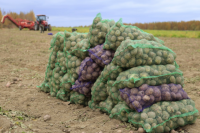 Аграрии собирают урожай картофеля