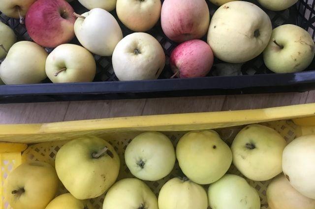 Зоопарк Ижевска отказался принимать яблоки от местных жителей