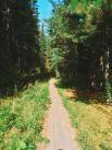 Экологические тропы имеют разную протяжённость – от трёхсот метров до четырёх километров