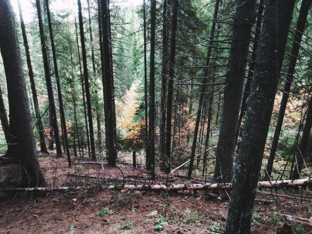 Леса в Югре разные: может быть живописный, а может – загадочный и зловещий