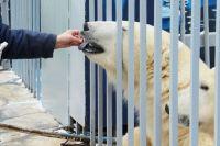 Медведь Сэрику сначала вовсе не вышел к бассейну, а его подруга Милка была чуть смелее.