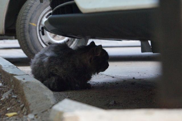 В Петербурге в 2021 году откроют новые приюты для бездомных животных