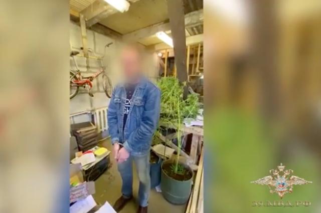 Задержали за выращивание конопли если часто курить марихуану