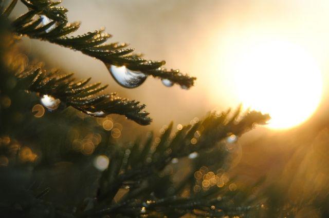 Конец сентября будет жарким: в Украине прогнозируют потепление