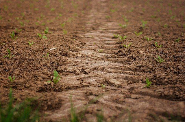 Тюменский район вкладывает инвестиции в сельское хозяйство
