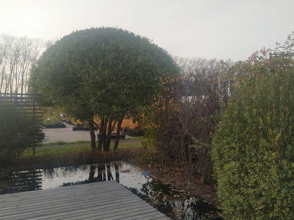 Осень в Японском саду и Выставочных садах AstraGarden