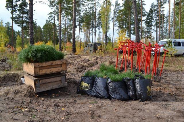 Тюменская область присоединилась к акции «Сохраним лес»
