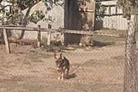 В Запорожской области мужчина натравил собаку на правоохранителей.