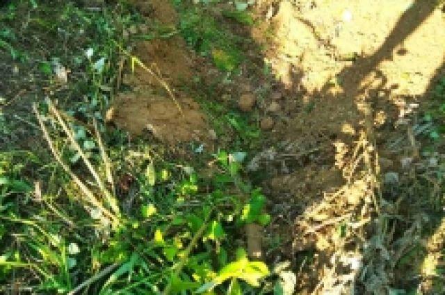 Житель Заводоуковска убил подругу и спрятал ее тело в лесу