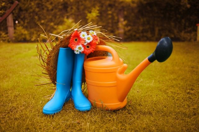 Как правильно перекопать почву, когда убирать морковь и капусту и чем помочь плодовым деревьям? Ответы - в материале