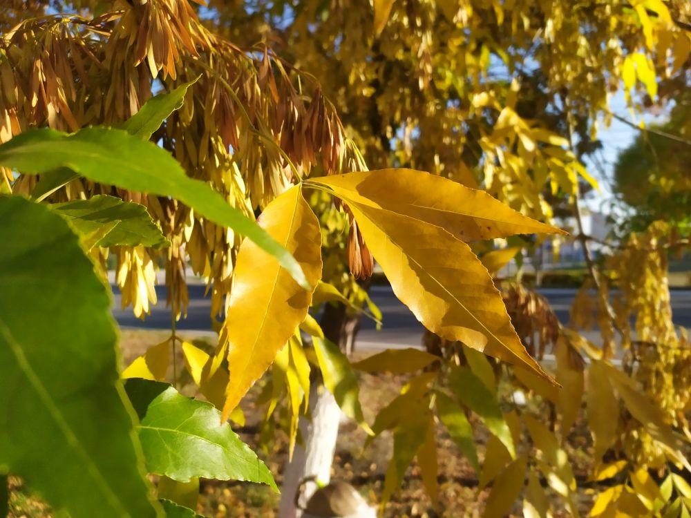 Если лето заряжает солнечным теплом и светом, то осень наполняет красками, контрастом, буйством.