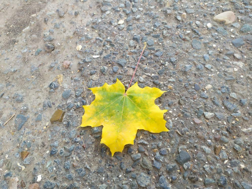 Этот - желтый, одинокий - всем бросается под ноги. Ищет счастья...