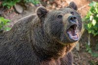Медведя в посёлке видели ночью.