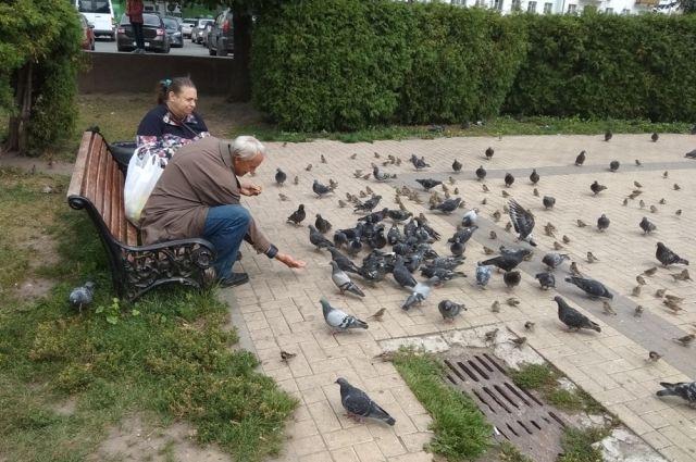 По словам Елены Валовой, подкармливать птиц нужно, ведь человек вокруг себя настолько сильно изменил среду, что часто пернатым сложно самим прокормиться.