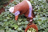 Для хорошего урожая в новом сезоне дачу нужно подготовить до холодов.