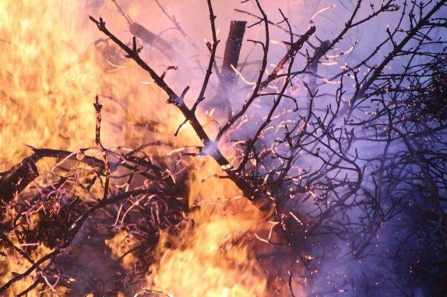 Лесные пожары мешают нам жить