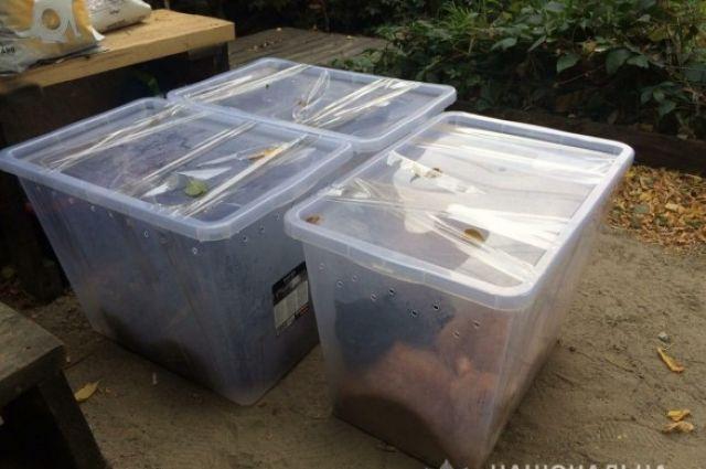 В Харькове обнаружили выброшенных котов в закрытых пластиковых контейнерах
