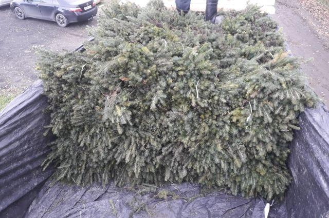 Компания подготовила 685 тысяч сеянцев ели сибирской для посадки на арендованных лесных участках в Енисейском районе Красноярского края.