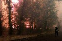 Правительство выделит помощь пострадавшим из-за пожаров в Луганской области