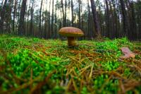 Ежегодно в России регистрируют около тысячи пострадавших от отравления грибами, почти 30 случаев заканчивается летальными исходами.