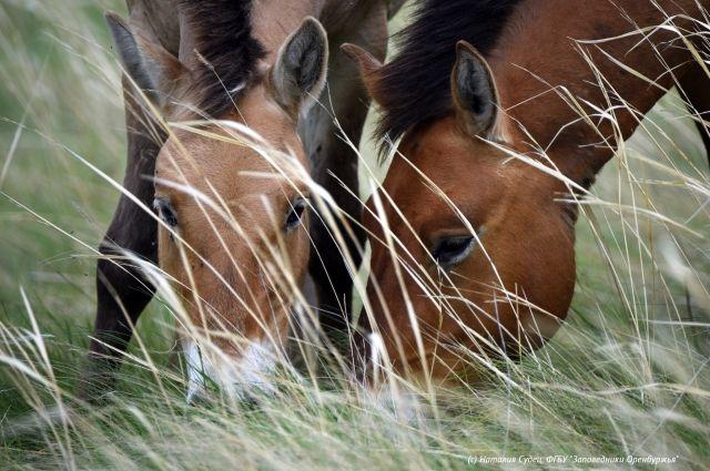 В заповедниках Оренбуржья заявили о завершении туристического сезона этого года.