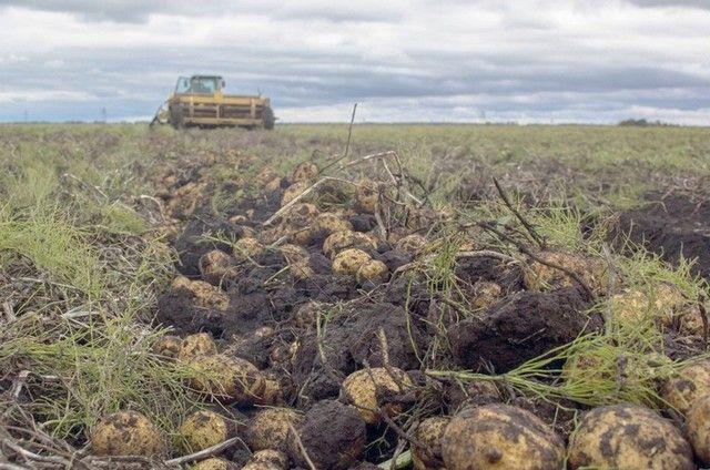 В сельском хозяйстве многое зависит от погоды, а она в этом году была к брянским аграриям благосклонна.