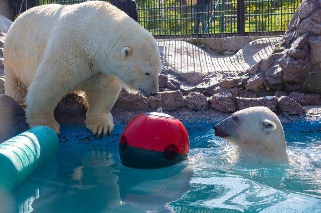 Игрушки, которые помогают животным проявить сообразительность, иногда силу и сноровку, чтобы «добыть» еду.