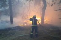 Пожары в Луганской области: в Сети обнародовали видео вероятного поджога