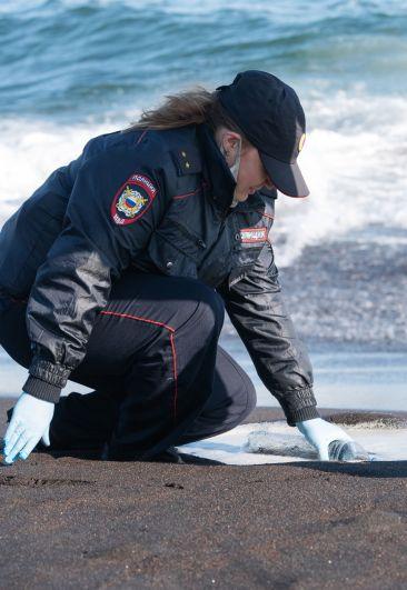Сотрудник УМВД Камчатского края берет пробы воды в Тихом океане во время оперативно-разыскных мероприятий на месте предполагаемого происшествия на Халактырском пляже на Камчатке. 3 октября 2020 г.