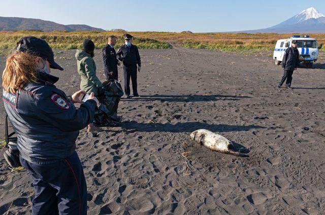 Глава Камчатки назвал три возможные причины экологического бедствия