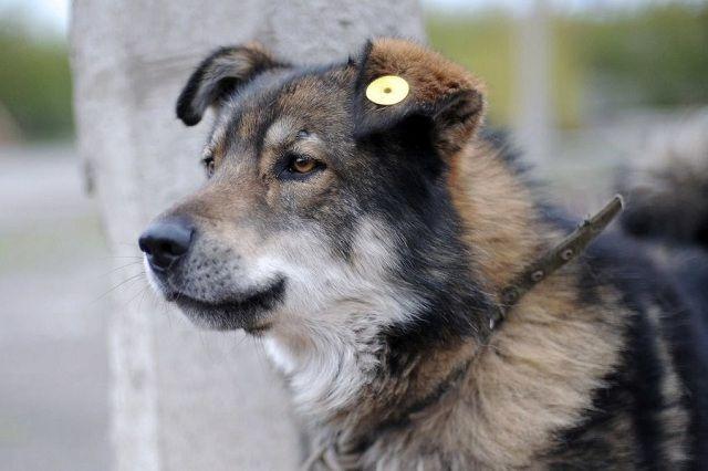 Сейчас 43 собаки находятся на содержании города