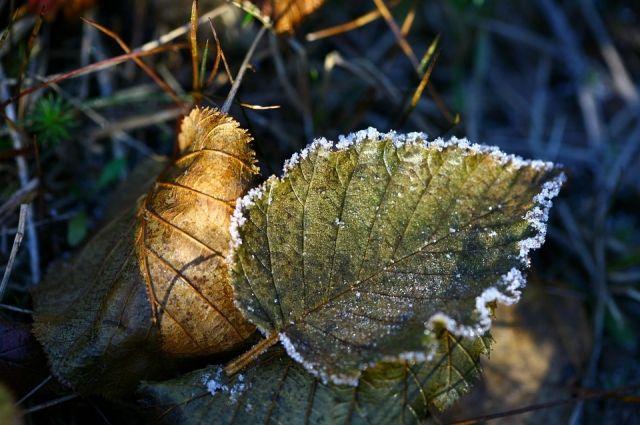 Ночью в целом ряде территорий Пермского края температура воздуха упала до -6 и ниже.