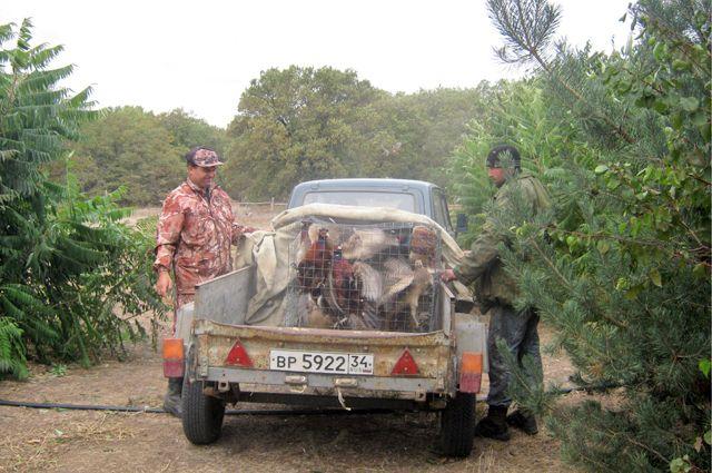 Работа над восстановлением местной популяции фазанов начата более 10 лет назад.