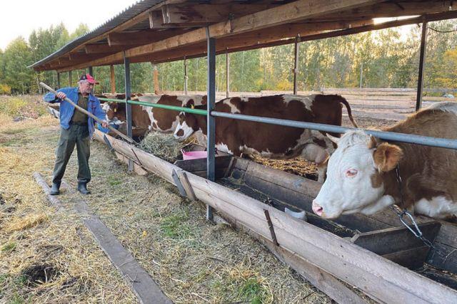 Начинали с кустика сирени, а сейчас у четы Тереховых своя животноводческая ферма.