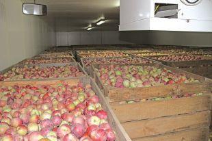 Современное фруктохранилище оснащено голландским и немецким оборудованием.