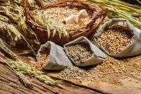 Европарламент открыл дорогу экспорту украинских семян в ЕС