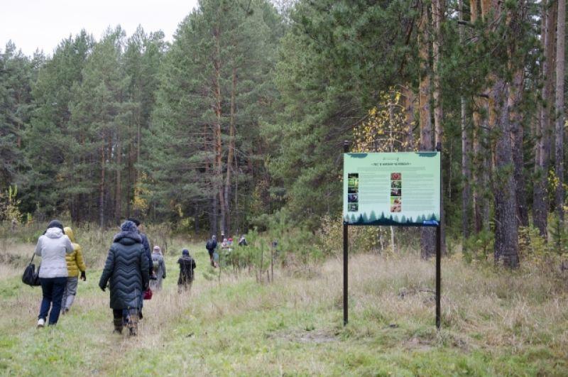 Установлено 15 стендов с информацией, а экологический маршрут ведет прямо в чащу.