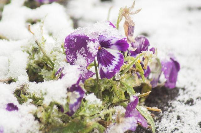 На всей Сибири установилась температура ниже нормы.