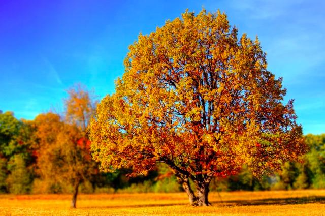 Синоптики рассказали о прогнозе погоды на 10 и 11 октября.