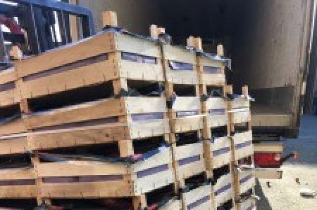 В Оренбурге изъяты запрещенные к ввозу в РФ груши и грибы.
