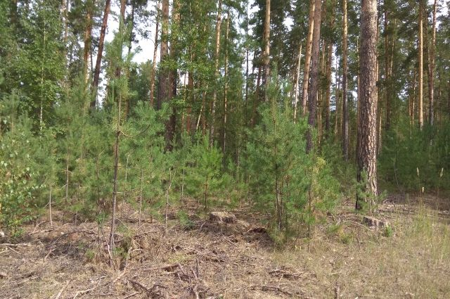 В республике также ограничили вырубку леса вокруг населённых пунктов.