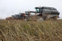 Впервые в истории региона средняя урожайность зерновых и зернобобовых культур выше общероссийской