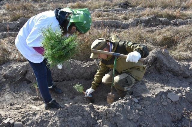В Спасском районе во время акции «Сохраним лес» посадили 22 тысячи сосен.