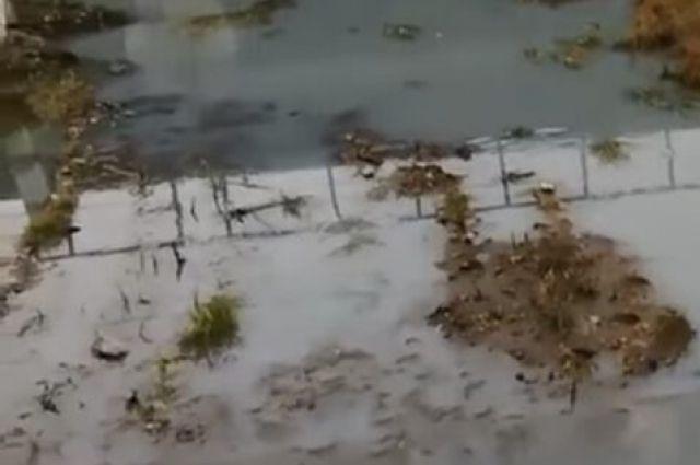 Проверка надзорного ведомства не нашла опасных веществ в водоёме Шелеховского района.