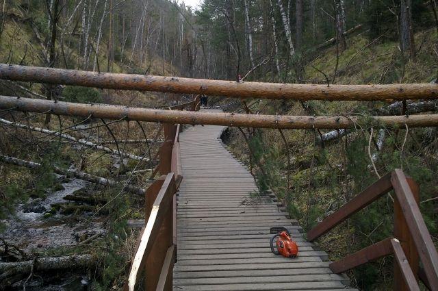 Деревья убирают для безопасности посетителей.