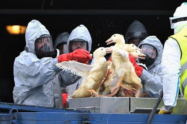 Летальность от гриппа H5N1 составляет 53%.