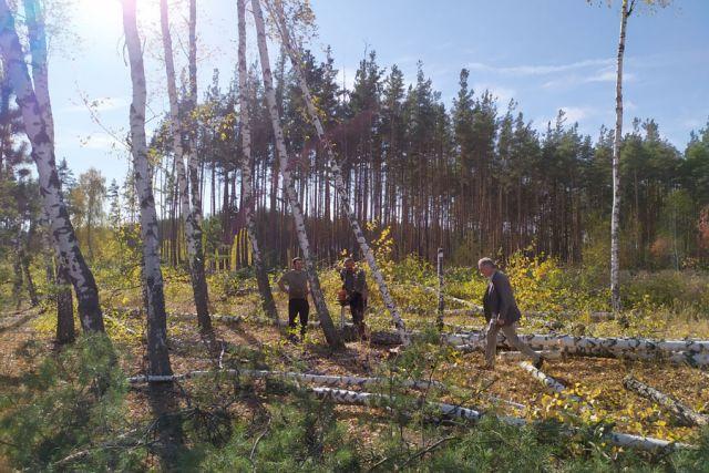 Стоило лишь немного углубиться в лес, чтобы понять – работа кипит.