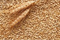 Украинские хлеборобы намолотили 44,1 млн тонн зерна