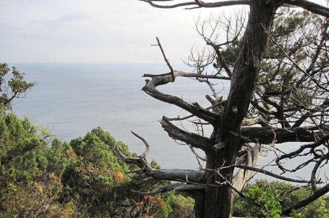 Для восстановления сгоревшего леса естественным путем понадобится около ста лет.