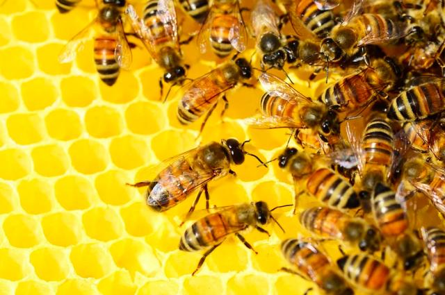 Более 1 млн рублей выплатили фермерам, пострадавшим от гибели пчел